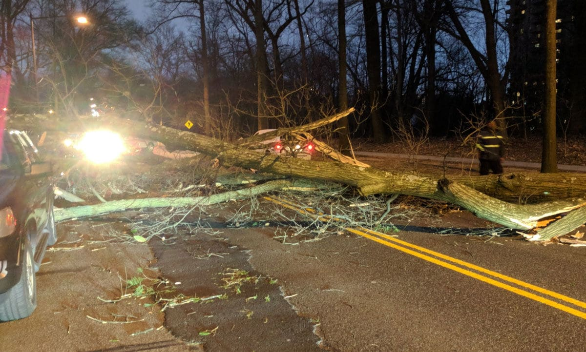 A tree is down, completely blocking the 4200 block of Massachusetts Avenue NW by Embassy Park Drive. It took out a couple of cars in the process.  (WTOP/Brandon Millman)