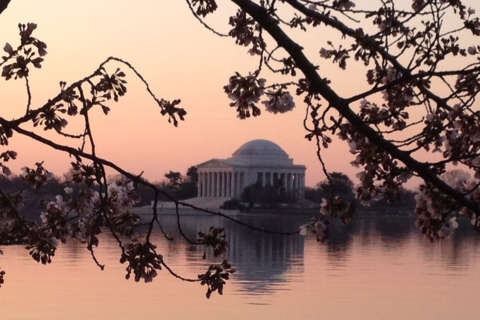 DC cherry blossoms' peak bloom period pushed back