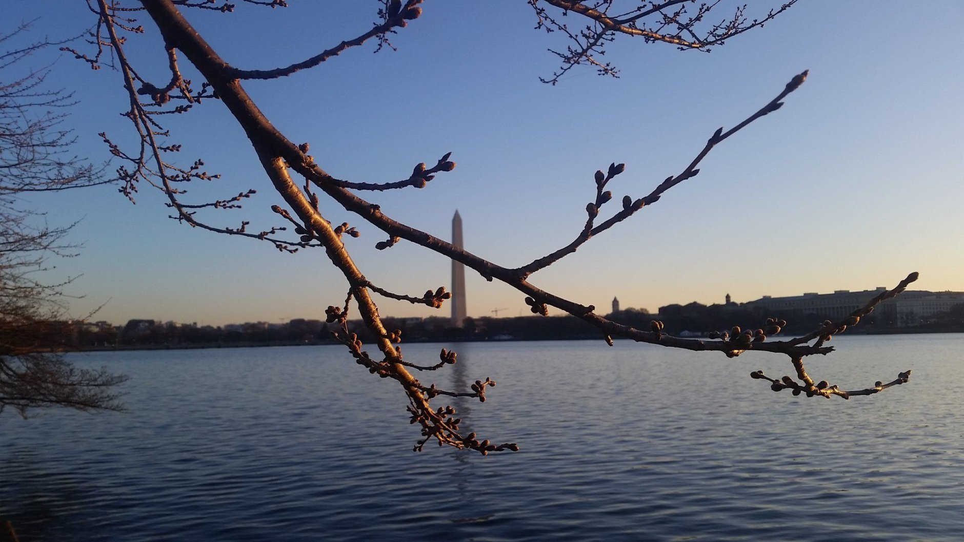 The peak date was moved back after a cold spell. (WTOP/Kathy Stewart)