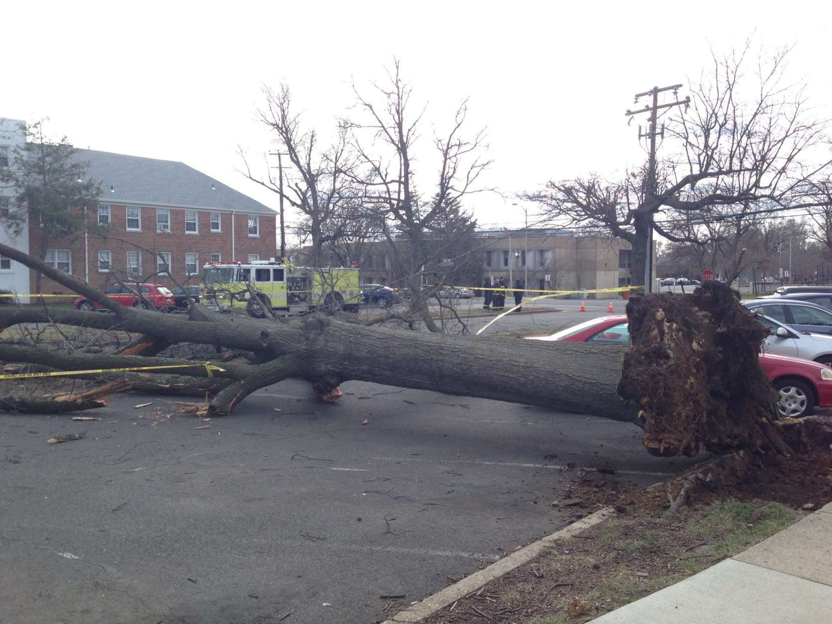 In Arlington, the severe wind knocked down a larger tree at South Walter Reed Drive and South Eighth Street. (Courtesy @smugclimber via Twitter)