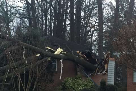 2 trapped, injured under fallen trees in Va., Md. homes