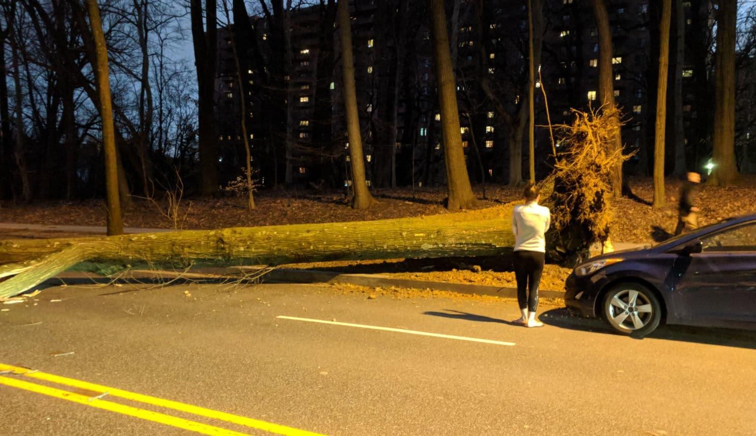 A fallen tree blocks the area of the 4200 block of Massachusetts Avenue in Northwest D.C. on Friday, March 2, 2018. (WTOP/Brandon Millman)