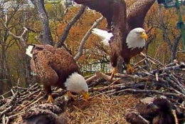 Liberty and Justice with the already quickly-growing Honor and Courage. (Courtesy Earth Conservation Corps)