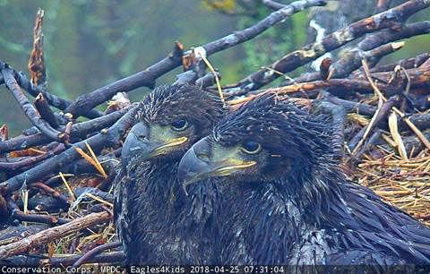 DC eaglets get names courtesy of 2 Northern Va. schools