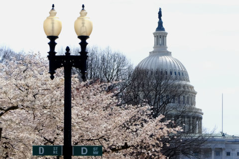 Road closures, but limited Metro work as Cherry Blossoms wrap up