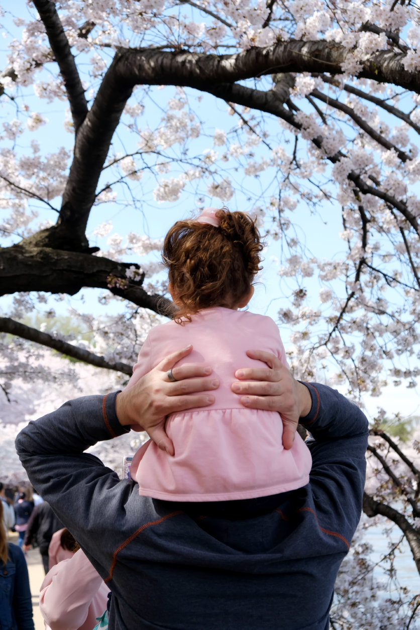 The D.C. Cherry Blossoms are at peak bloom. (Courtesy Shannon Finney/shannonfinneyphotography.com)