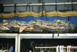 "Alligator head pieces for performers in Cirque du Soleil's, ""LUZIA"". (Courtesy Shannon Finney)"
