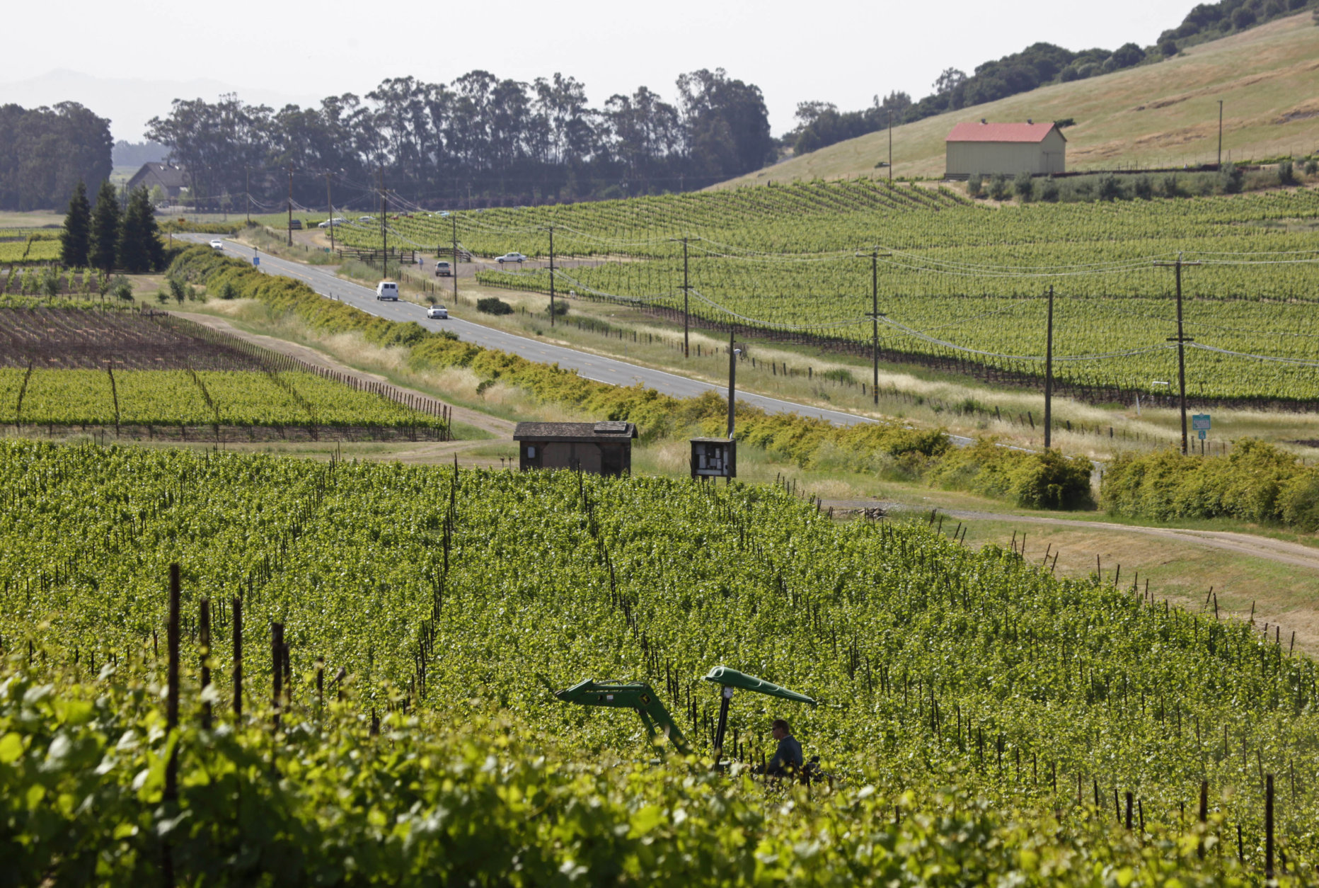 This May 11, 2009 file photo shows a tractor as it makes its way through a vineyard with Highway 121 and other vineyards in the background in Sonoma, Calif.  Sonoma, in the heart of California wine country, is famous for award-winning wine and food and scenic country roads.   (AP Photo/Eric Risberg, FILE)