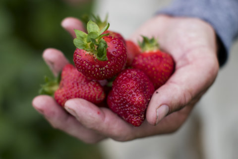 Strawberries, apples, spinach: Guide highlights fruits, veggies with most pesticide residues