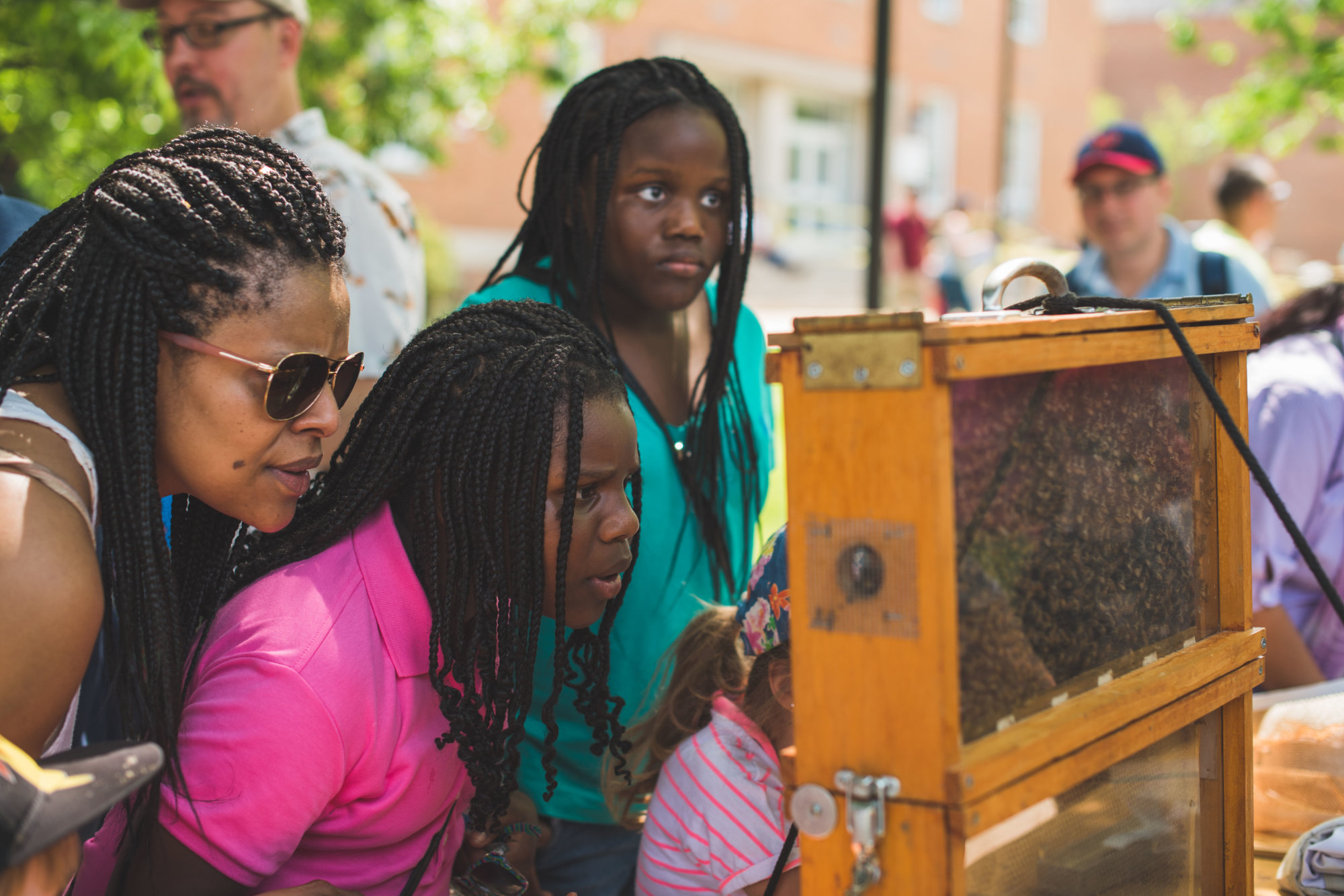 In the courtyard of the Animal Sciences Building you can learn about bee keeping and get up close and personal with some honey hives. (Courtesy University of Maryland)