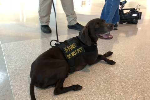 Bomb-sniffing dog show: TSA demos talented K9s at BWI