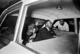 FILE - In this June 12, 1964 file photo, the Rev. Dr. Martin Luther King, Jr. speaks to Andrew Young as King rides in the back seat of a police car with a police dog as he is returned to jail in St. Augustine, Fla., after testifying before a grand jury investigating racial unrest in the city. (AP Photo, File)