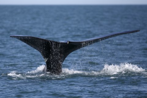 As whales fade, movement they spawned tries to keep up hope