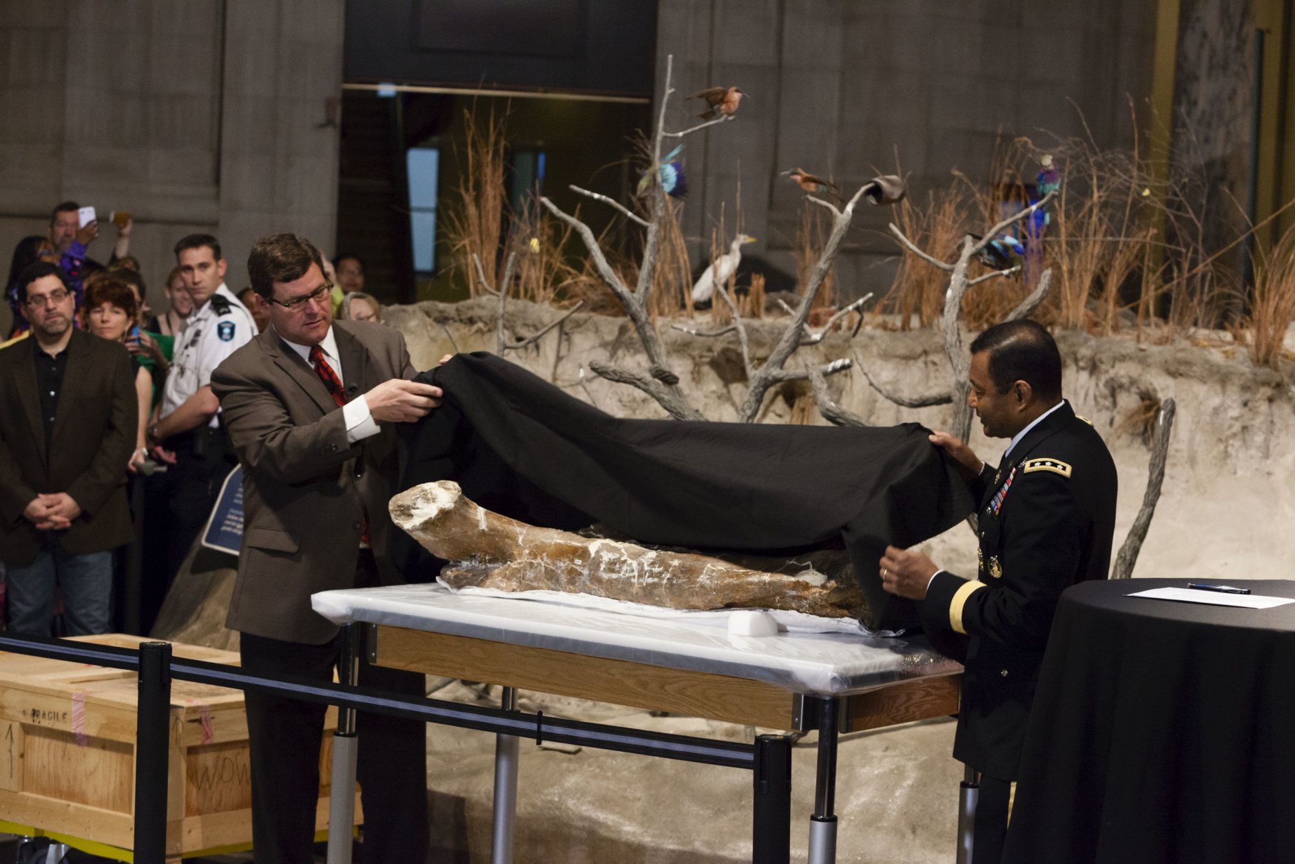 "The National Museum of Natural History welcomed ""the nation's T. rex"" to the Smithsonian Institution on April 15, 2014. It is on loan from the U.S. Army Corps of Engineers. Lt. Gen. Thomas P. Bostick with the Army Corps of Engineers joined the National Museum of Natural History Sant Director Kirk Johnson for the unveiling of the creature's femur bone. (Photo by James Di Loreto/Smithsonian Institution)"