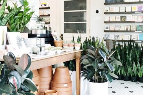 Specialty plant boutiques find a niche in urban jungles