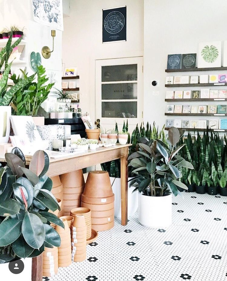 D.C.'s Little Leaf is the marriage of pretty paper goods and bohemian plants species, and it's from the same owner behind the popular retailer Salt & Sundry. (WTOP/Elly Rowe)