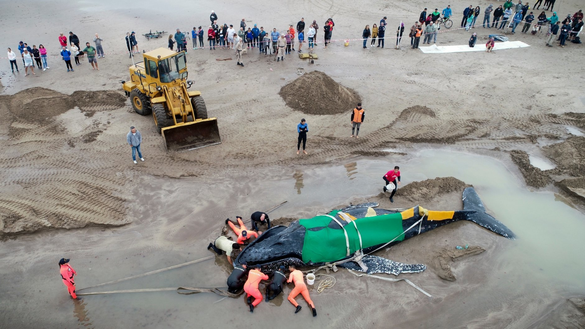 In this Monday, April 9, 2018 photo, members of the Argentine Naval Prefecture and volunteers try in vein to rescue a stranded humpback whale in Mar del Plata, Argentina. The whale stranded on Argentina's coast died Monday despite a round-the-clock rescue effort over the weekend that drew in dozens of volunteers. (AP Photo/Pablo Hugo Funes)