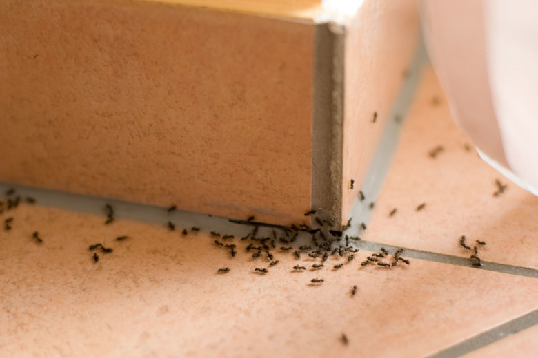 Are you being ant-agonized? How to get rid of those pests indoors | WTOP
