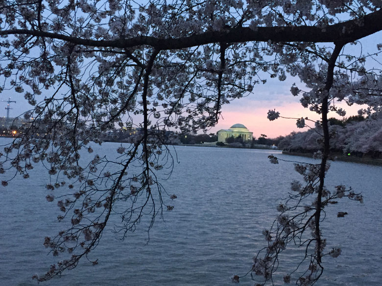 Photo shows cherry blossoms and Jefferson Memorial