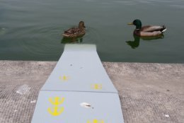 Two ramps at the Capitol Reflecting Pool, made to keep ducklings from drowning, were so successful last year, they're being brought back this spring. (WTOP/Kathy Stewart)