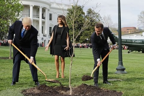 White House tree planted by Presidents Trump, Macron mysteriously vanishes