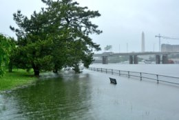 Floodwaters consume huge swaths of the Tidal Basin in Washington, Friday. (WTOP/Dave Dildine)