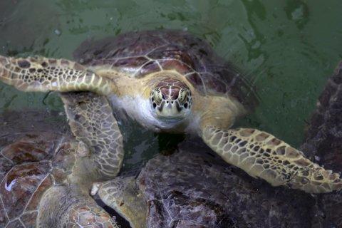 Greene Turtle says no to plastic straws