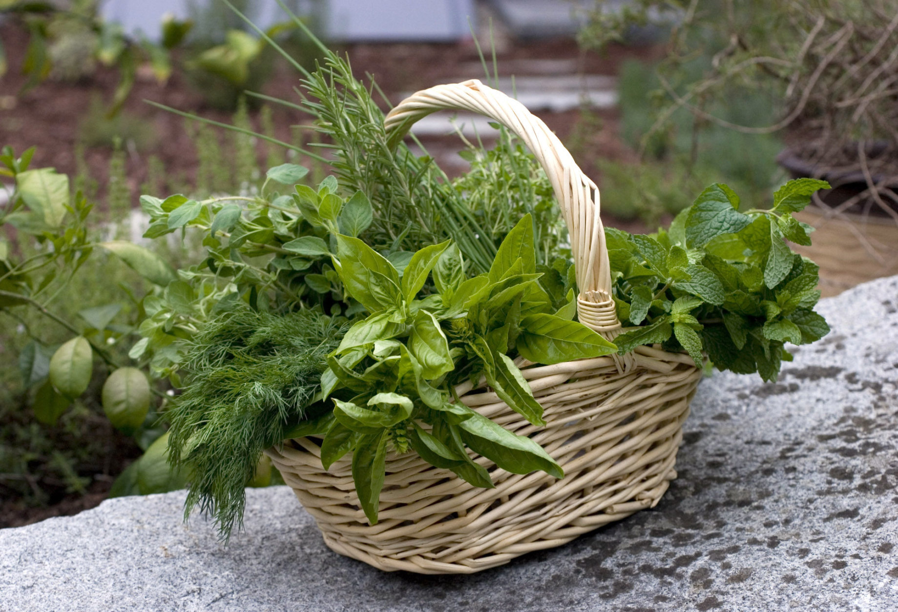 ** FOR USE WITH AP LIFESTYLES ** A variety of herbs are shown in this Aug. 20, 2007 photo.  Preserving some of the bounty of fresh herbs now coming in from the garden will keep your home grown efforts available all year. (AP Photo/Larry Crowe)