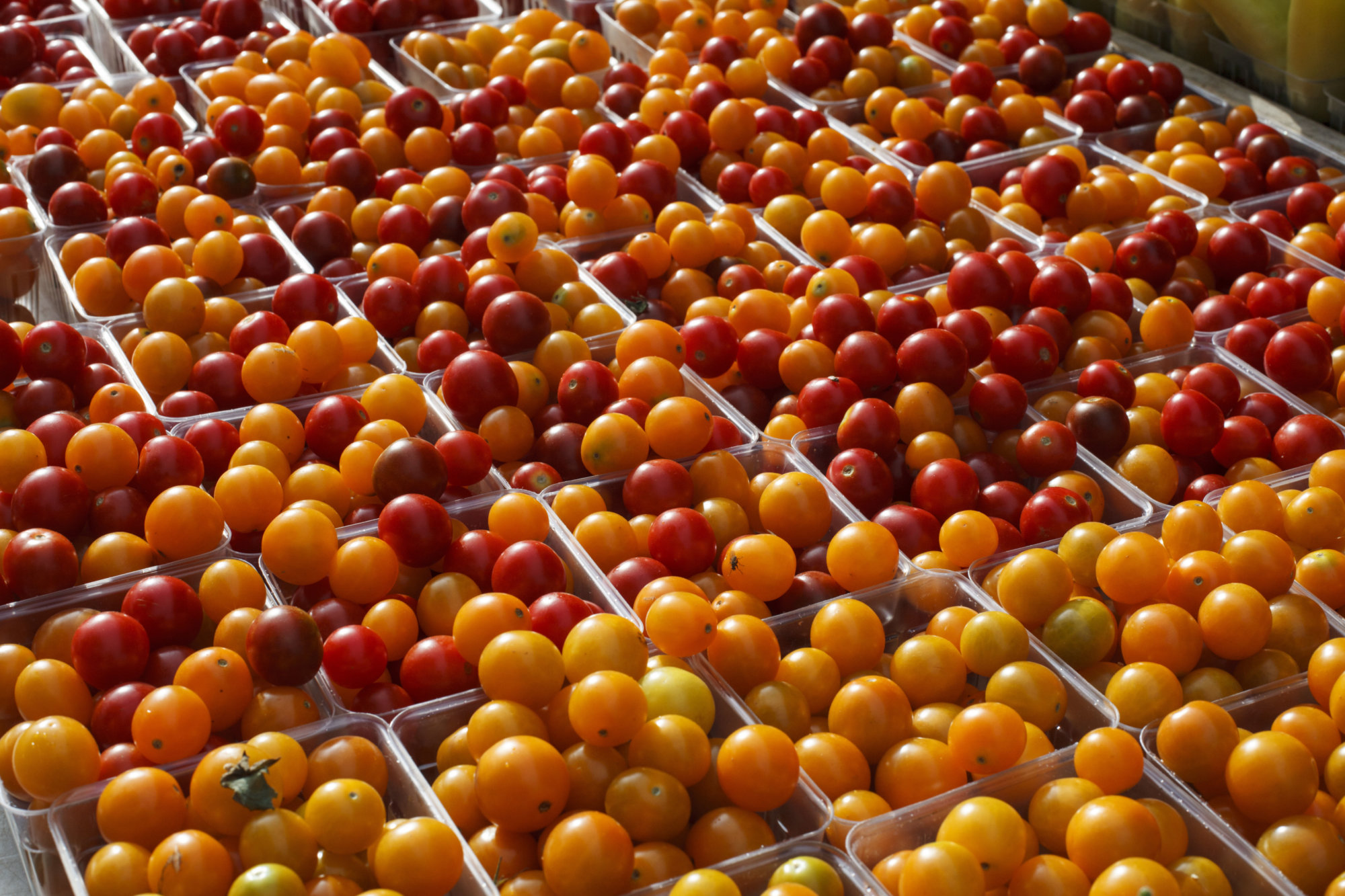 Cherry tomatoes are displayed for sale with summer fruits and vegetables at a farmers market in Falls Church, Va., Saturday, July 28, 2017. (AP Photo/J. Scott Applewhite)
