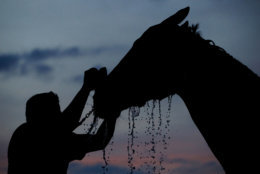 A horse gets a bath after a morning workout at Churchill Downs on Thursday, May 3, 2018, in Louisville, Ky. The 144th running of the Kentucky Derby is scheduled for Saturday, May 5. (AP Photo/Charlie Riedel