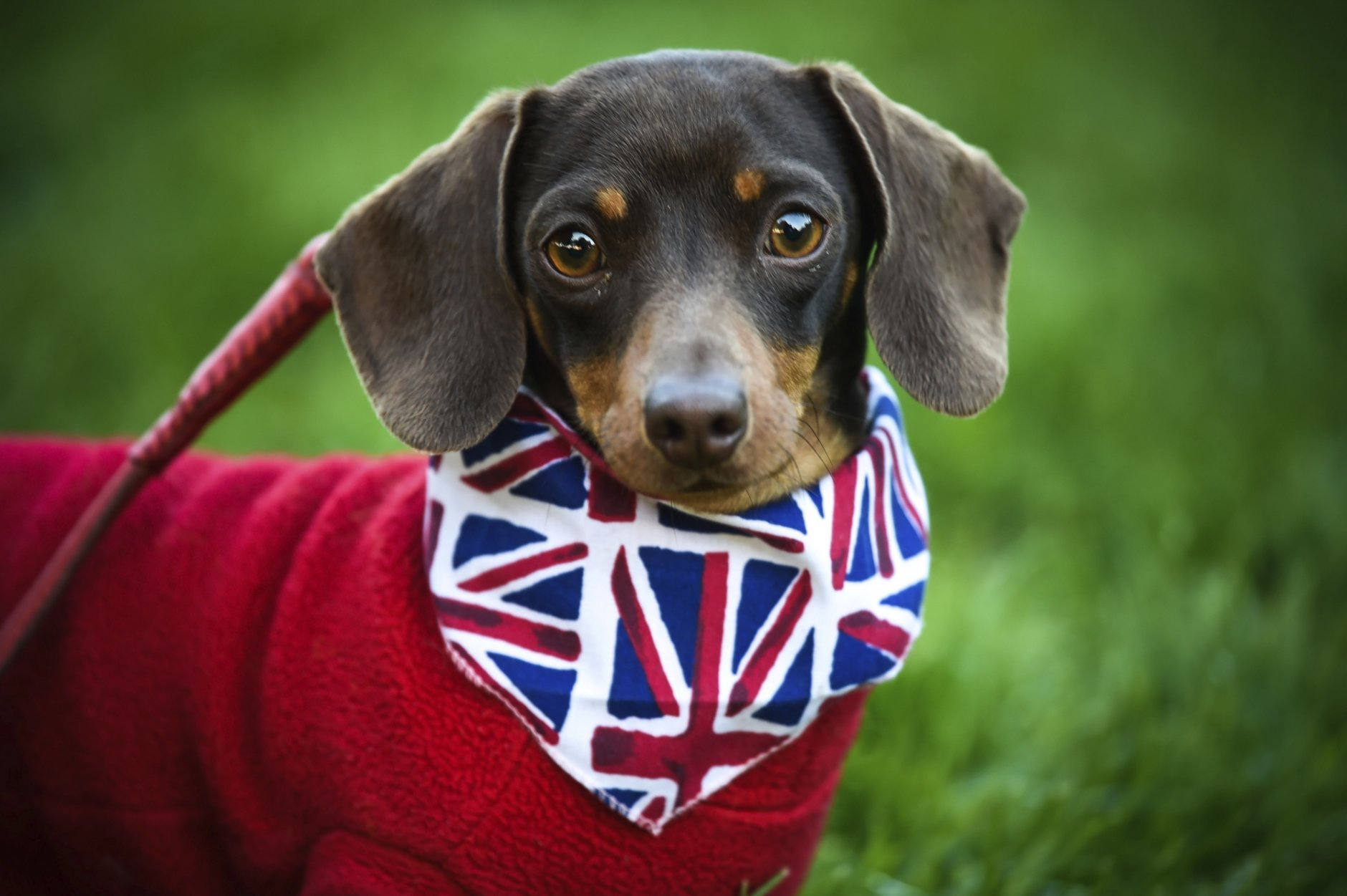 A dog wears a Union flag bandana in Windsor ahead of the wedding of Prince Harry and Meghan Markle at Windsor Castle near London Saturday, May 19, 2018. (Peter Summers/PA via AP)