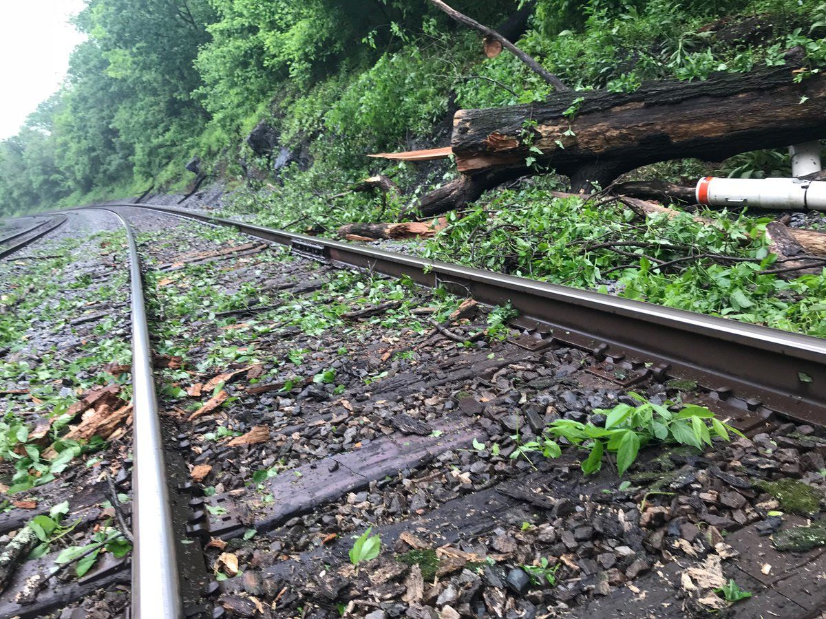 Felled trees along CSX track that normally carries MARC passengers between Point of Rocks and Brunswick. There is no MARC service west of Point of Rocks today. (WTOP/Neal Augenstein)