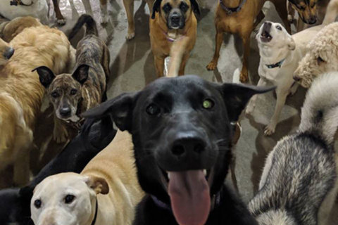 Did a Labrador mix snap a group selfie? Looks that way