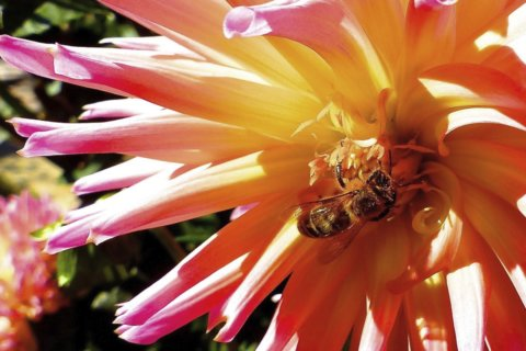 7 simple things you can do to save the bees on National Honeybee Day