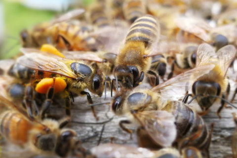 New buzz at MOM's Organic Market: Bees for sale