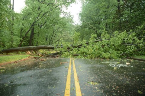 How to tell which trees are at risk for falling during severe weather