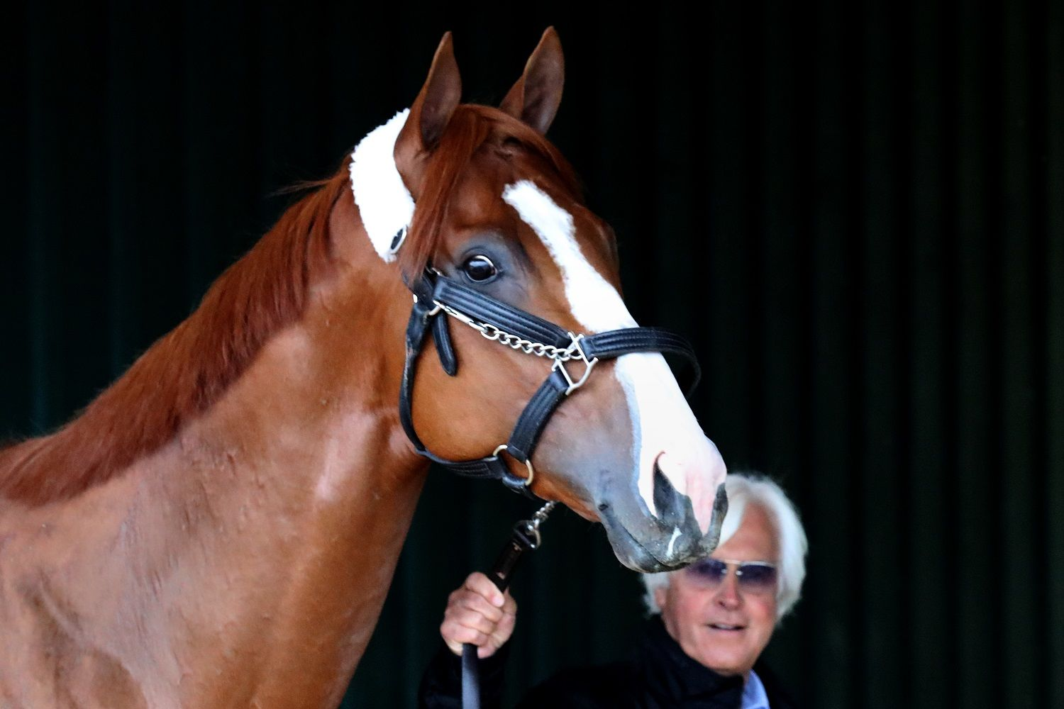 BALTIMORE, MD - MAY 16: Trainer Bob Baffert walks Kentucky Derby winner Justify in the barn after the horse arrived at Pimlico Race Course for the upcoming Preakness Stakes on May 16, 2018 in Baltimore, Maryland. (Photo by Rob Carr/Getty Images)