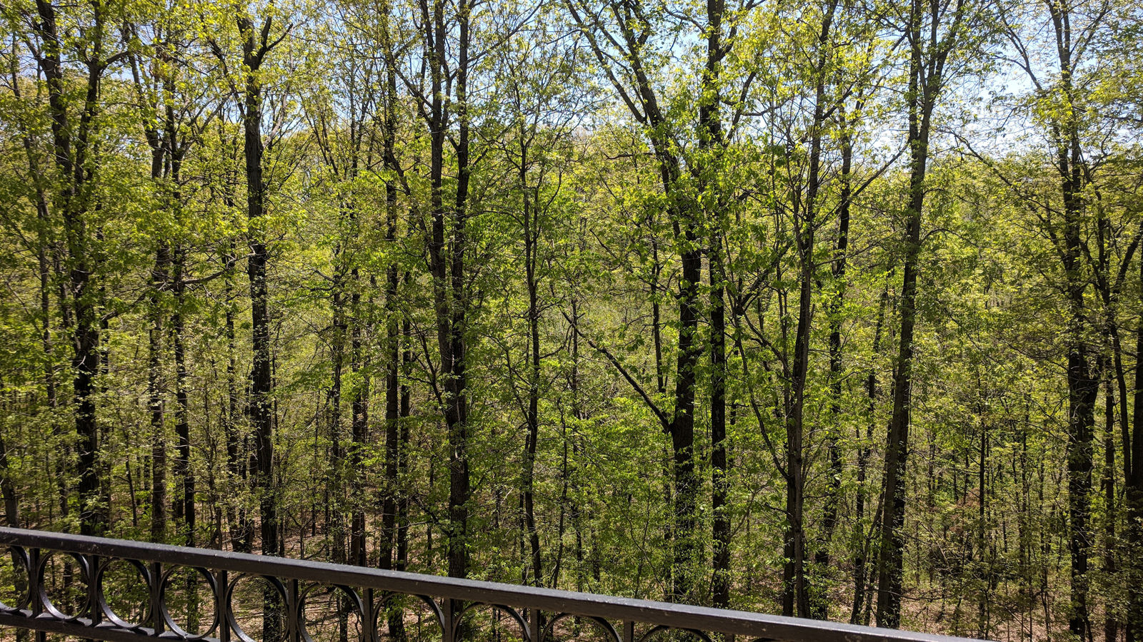 A view of a wooded area from an apartment complex near Franconia-Springfield station. (WTOP/Brandon Millman)
