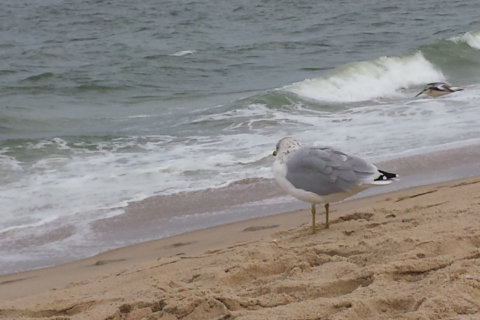 In Md., Ocean City keeps an eye on Tropical Storm Florence's impacts