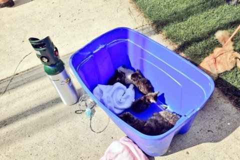 50+ cats found in Montgomery County hoarding situation