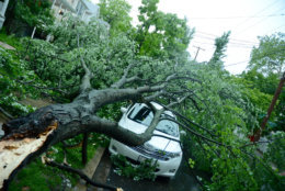 A tree fell on a car in Northwest D.C. at the intersection of Emery Place NW and 41st Street. (WTOP/Dave Dildine)