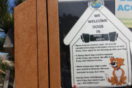 dewey beach sign allowing dogs on beac