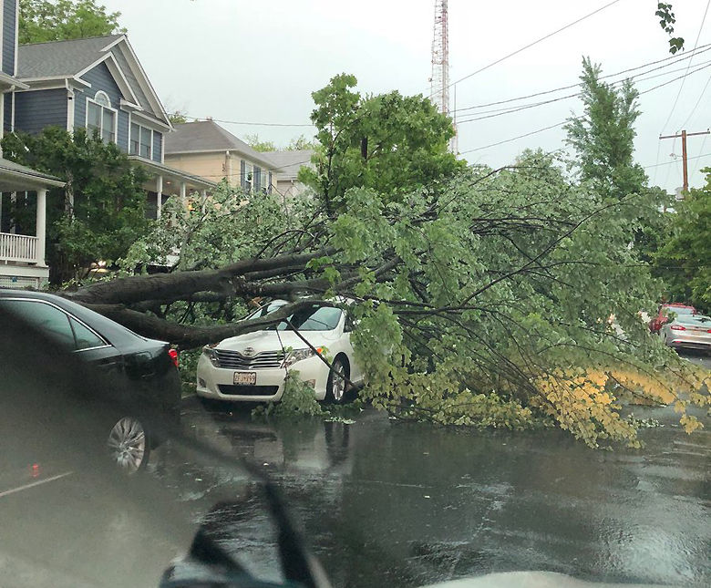 A tree came down at 41st Street and Emery Place NW (Courtesy @dcgsquared via Twitter)