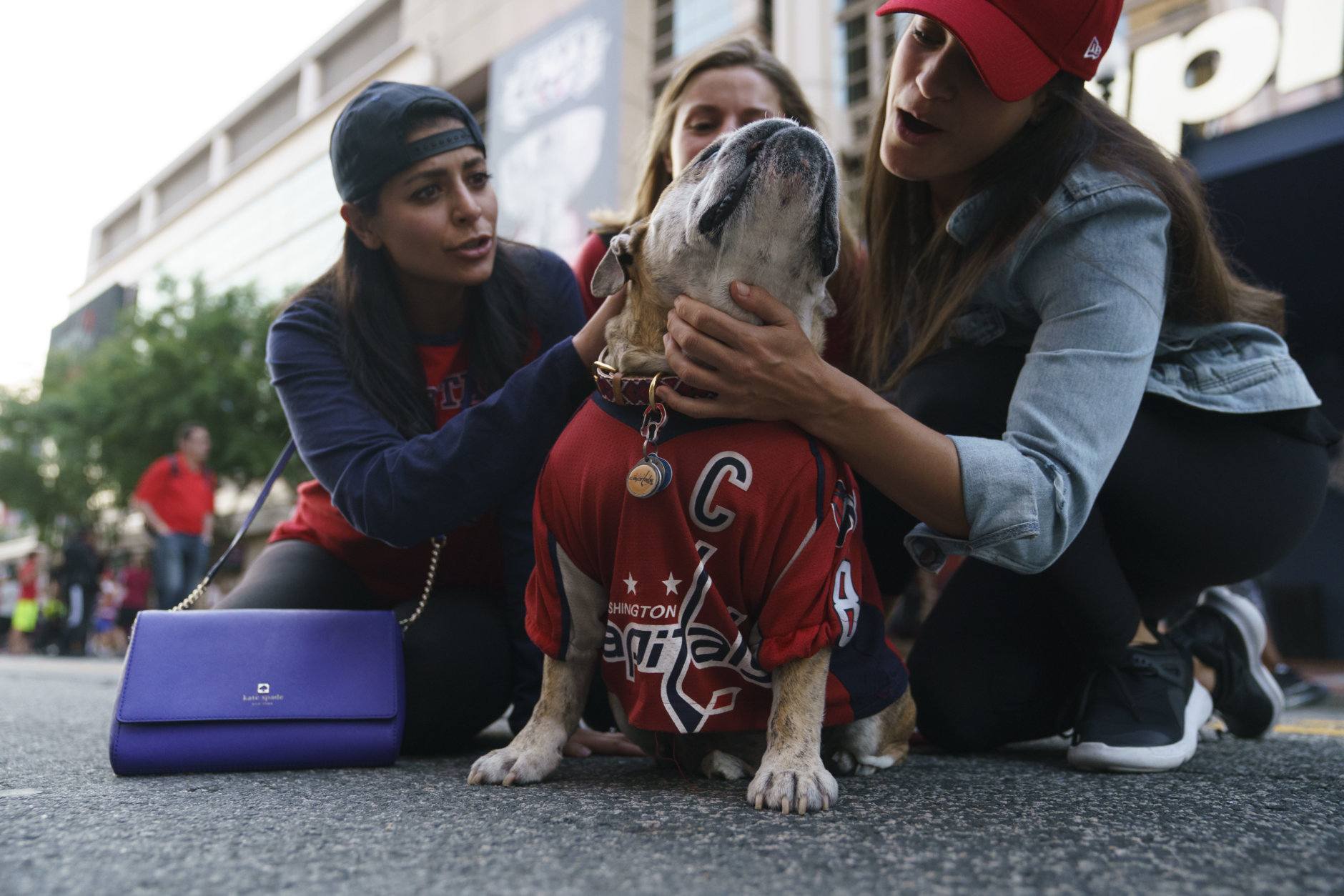 A Washington Capitals fans adore Ovie the Bulldog, dressed in a Washington Capitals forward Alex Ovechkin jersey, outside Capitol One Arena before that start of Game 4 of the NHL hockey Stanley Cup Final between the Washington Capitals and the Vegas Golden Knights, Monday, June 4, 2018, in Washington. (AP Photo/Carolyn Kaster)