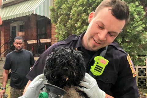 DC firefighters revive dog, cat after basement fire