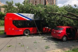 A tree fell onto a Metrobus and another vehicle in Alexandria Tuesday afternoon. (Courtesy International Association of Firefighters Local 2141)
