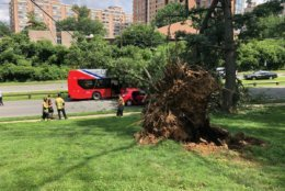 The tree fell on the Metrobus in the 2200 block of Beauregard Street around 2:30 p.m. No injuries were reported, Alexandria police said.