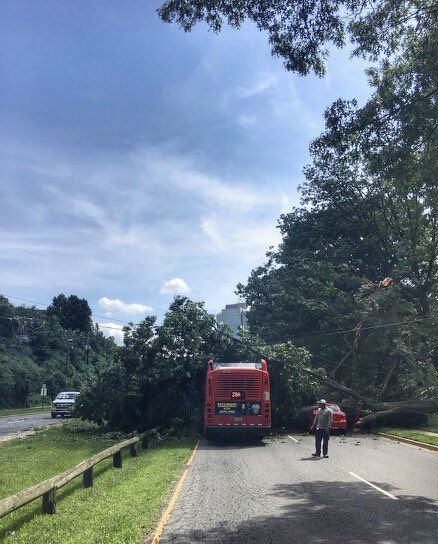 The tree brought down power lines and caused power outages in the area.