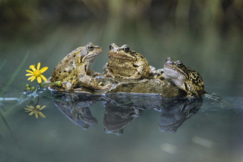 Where to find free berries and what to do with unwanted frogs