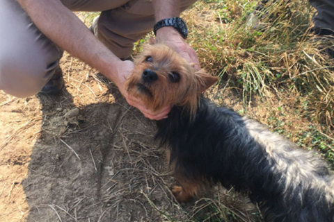 Yorkie stays with missing toddler all night, alerts search party with 'weak bark'